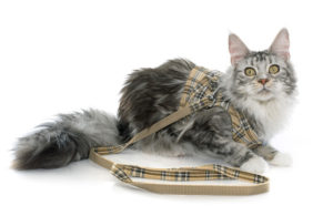 Cat Harness Leash Train Cat
